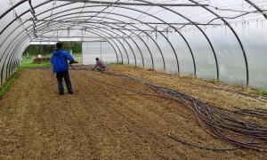 Beim Auslegen der Tröpfchenbewässerung.